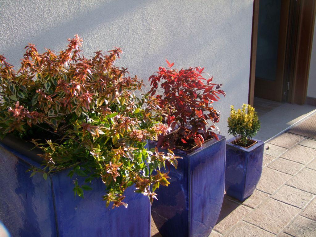Vivaio Acero Rosso : Acero zanatta alberto