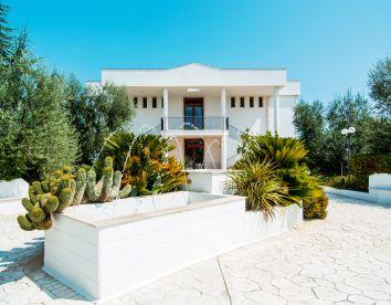 Foto il giardino degli ulivi