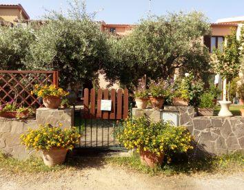 Foto24 degli ulivi
