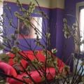 Bed And Breakfast Cascina nuova