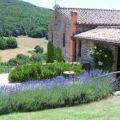 Farm-house Podere costa romana