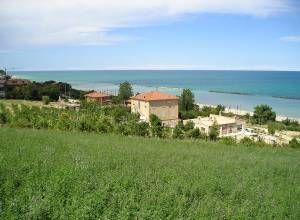 image of Mare in campagna