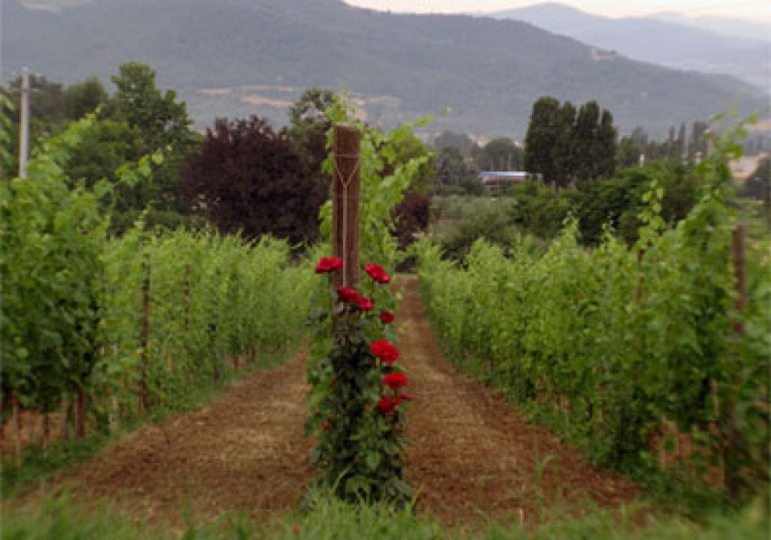 alle vigne di pace photo 6