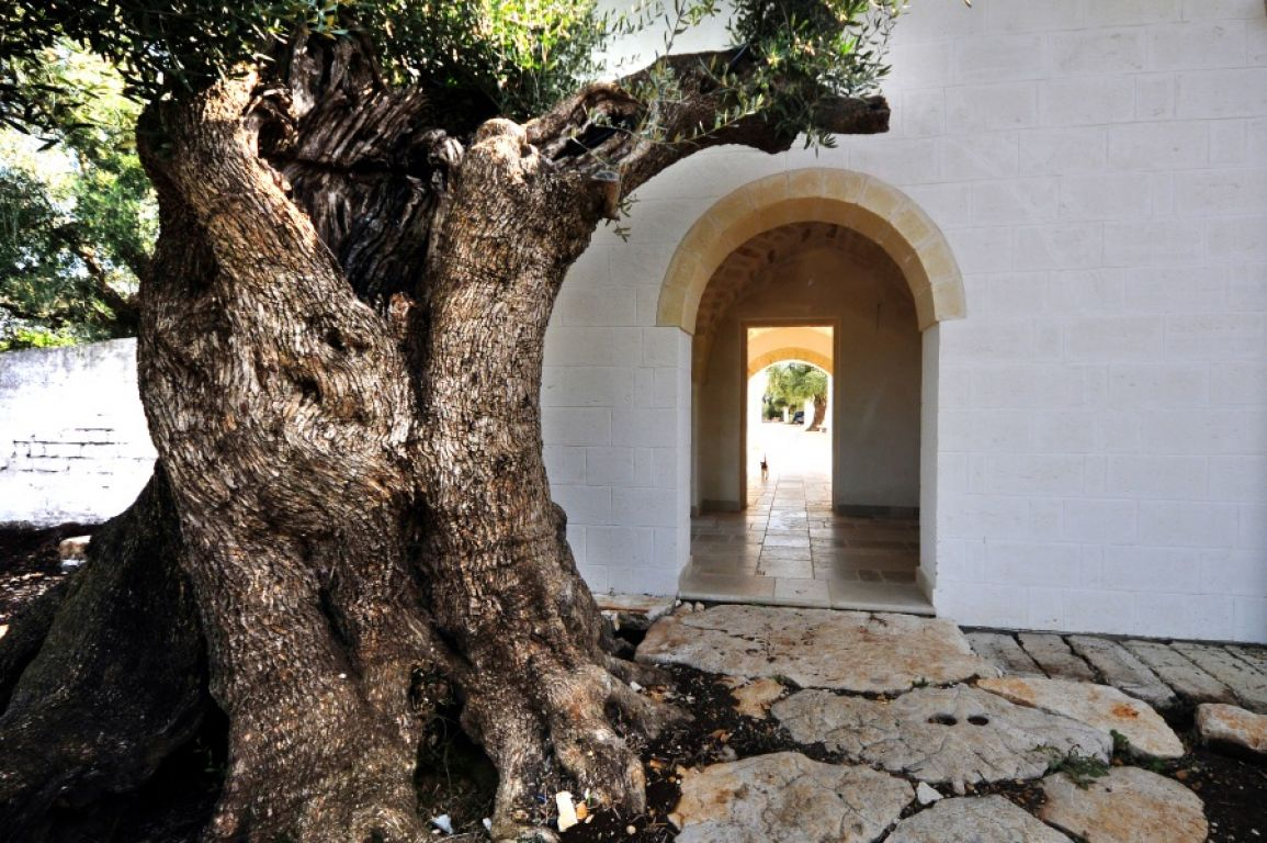 masseria de michele photo 11