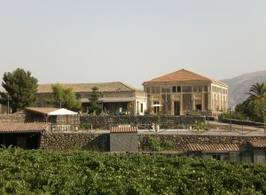 image of Etna Wine